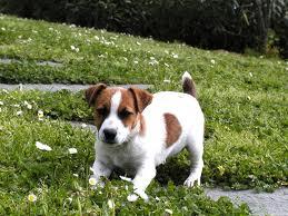 alimentazione cane casalinga croccantini | consigliveterinari
